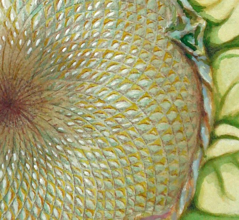 sunflowerdetail